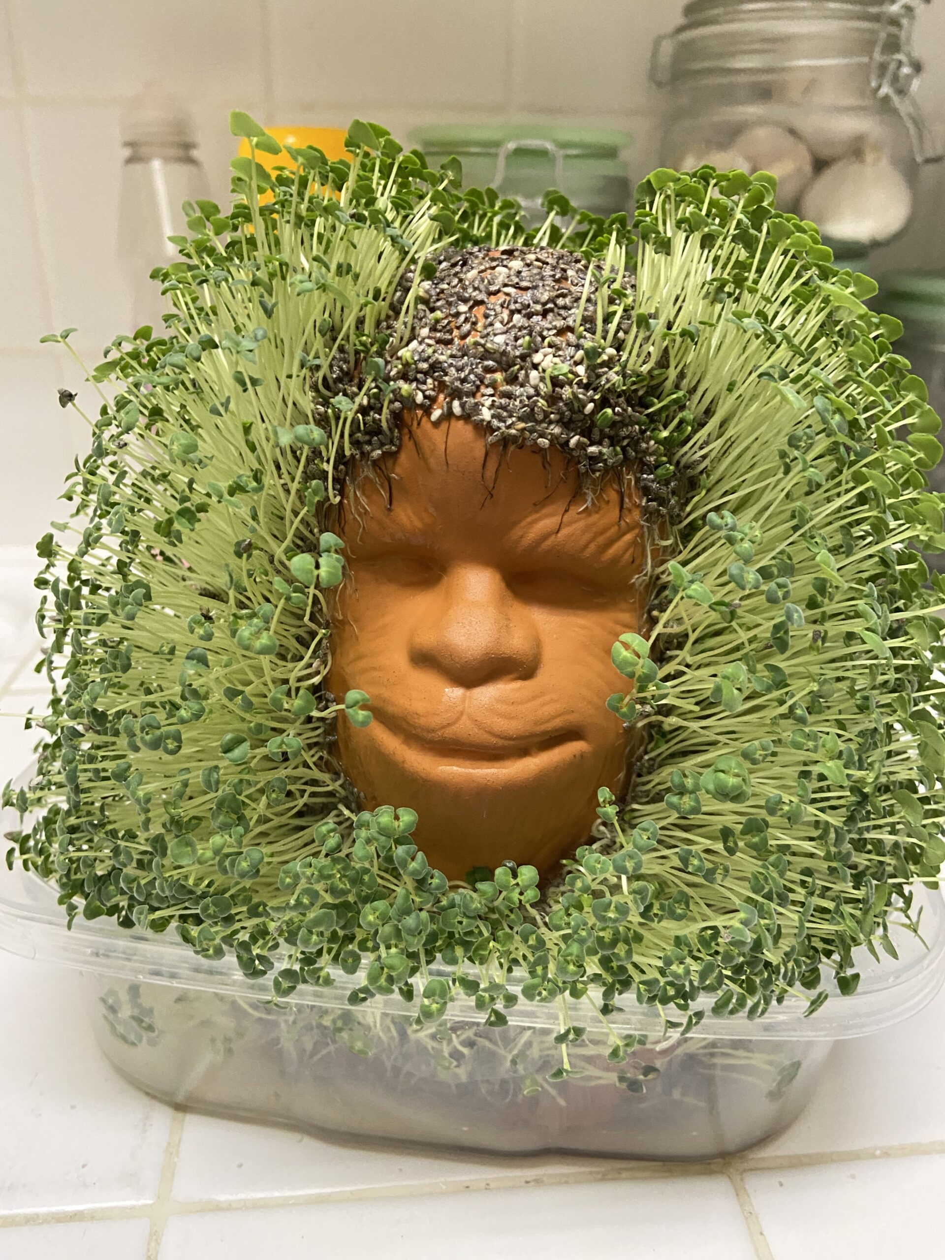 I Grew a Chia Pet – Diary of a Plant Killer
